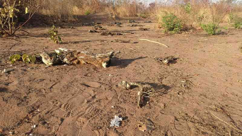 Cerca de 20 cachorros são encontrados mortos em terreno baldio em Juazeiro do Norte, CE; alguns usavam coleiras