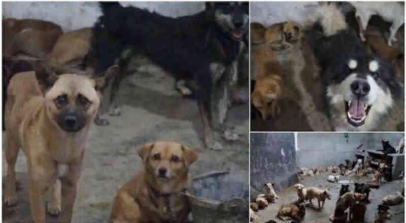 Operação salva 120 cachorros de serem mortos para consumo ilegal de carne