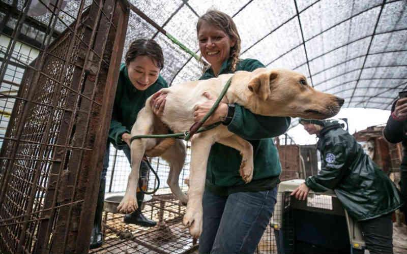 Fotos capturam o momento bonito em que cães criados para consumo de carne são finalmente libertados