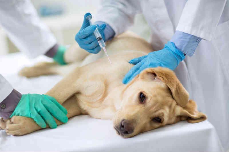 Zoonoses de Brasília está sem anestésico para eutanásia de animais, acusa ativista