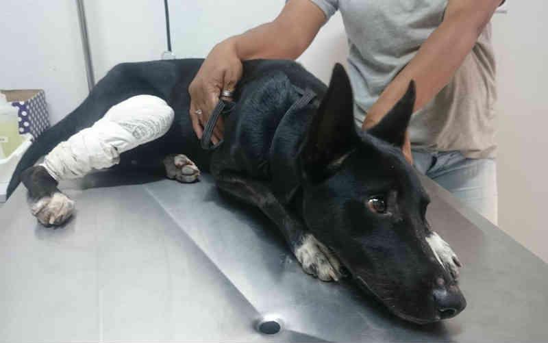 Conceito de violência contra animais é definido pela 1ª vez pelo Conselho Federal de Medicina Veterinária