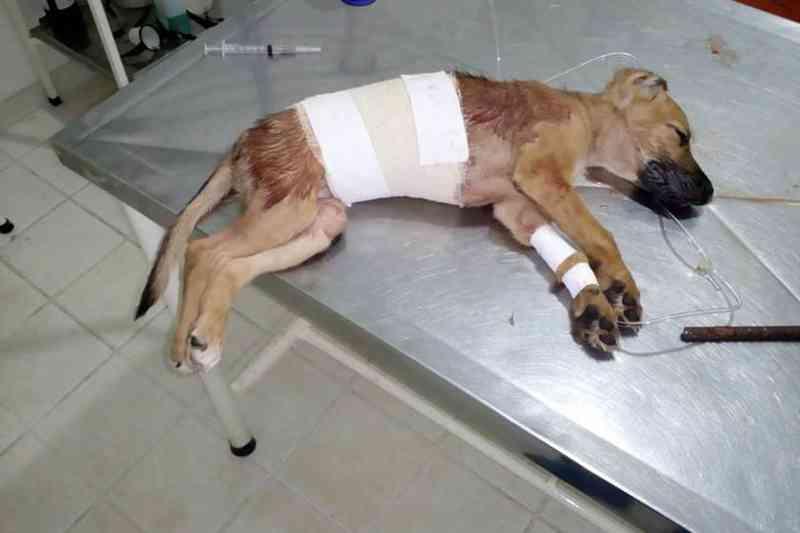 Mulher arremessa cachorrinha do 2º andar depois de brigar com companheiro