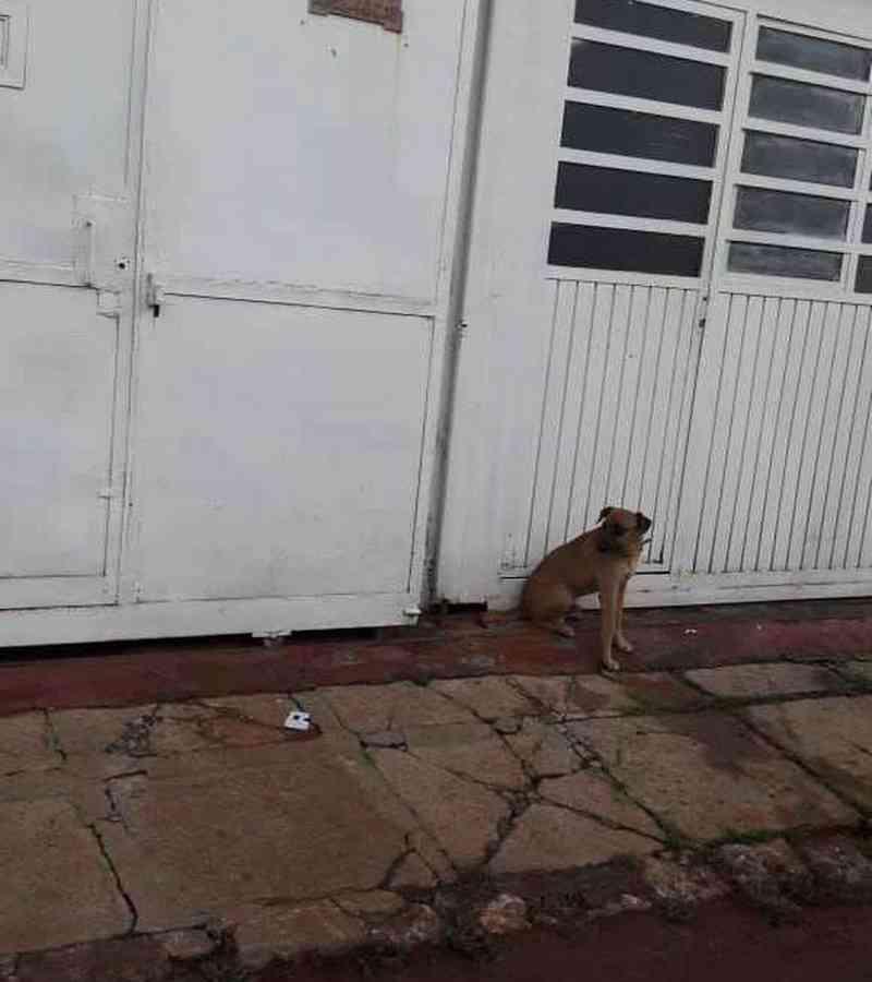 Cão deixado em casa no DF por família que viajou ficará sob cuidados de tutor temporário