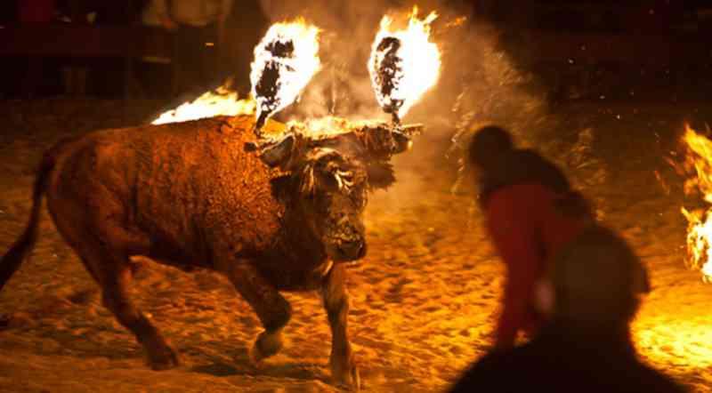 Festival ridiculamente cruel onde chifres são postos em chamas está de volta. Vamos acabar com isso!