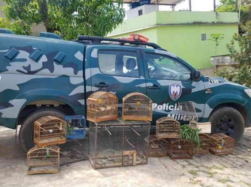 Vinte e um pássaros são apreendidos pela Polícia Ambiental em em São José do Calçado, ES