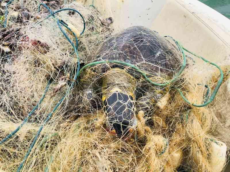 Tartarugas e arraias são encontradas mortas em rede de pesca na Baía de Vitória, no ES