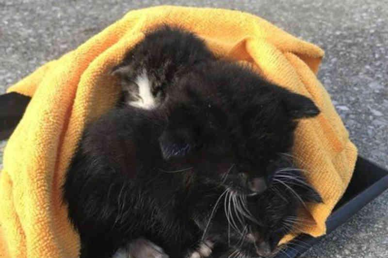 Jornalista salva gatinhos que perderam a mãe no furacão Michael na Flórida, EUA