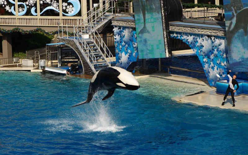 EUA: deputado da Flórida está atuando pela proibição do uso de orcas para entretenimento humano