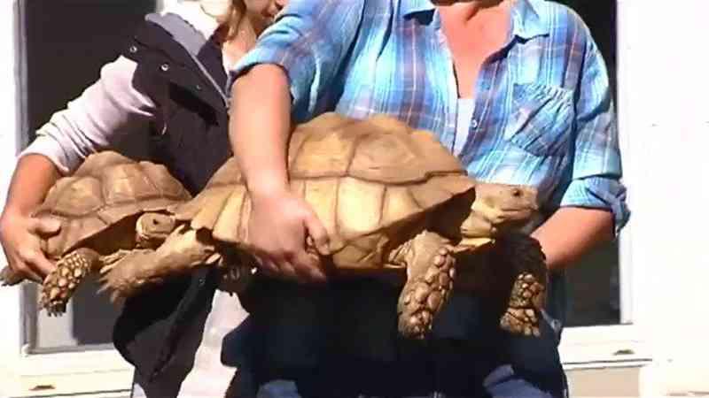 Polícia encontra cem cobras, três jacarés e dezenas de tartarugas em casa nos EUA