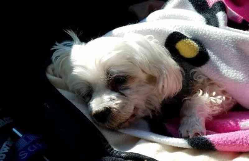 Cadela morre 4 dias após ser abandonada pelos seus tutores que queriam viajar