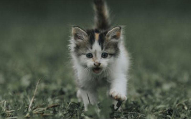 Que é isso?! Um funcionário do Controle Animal foi chamado para salvar um gatinho doente, então ele dirigiu-se com o gato para a floresta e o deixou lá!
