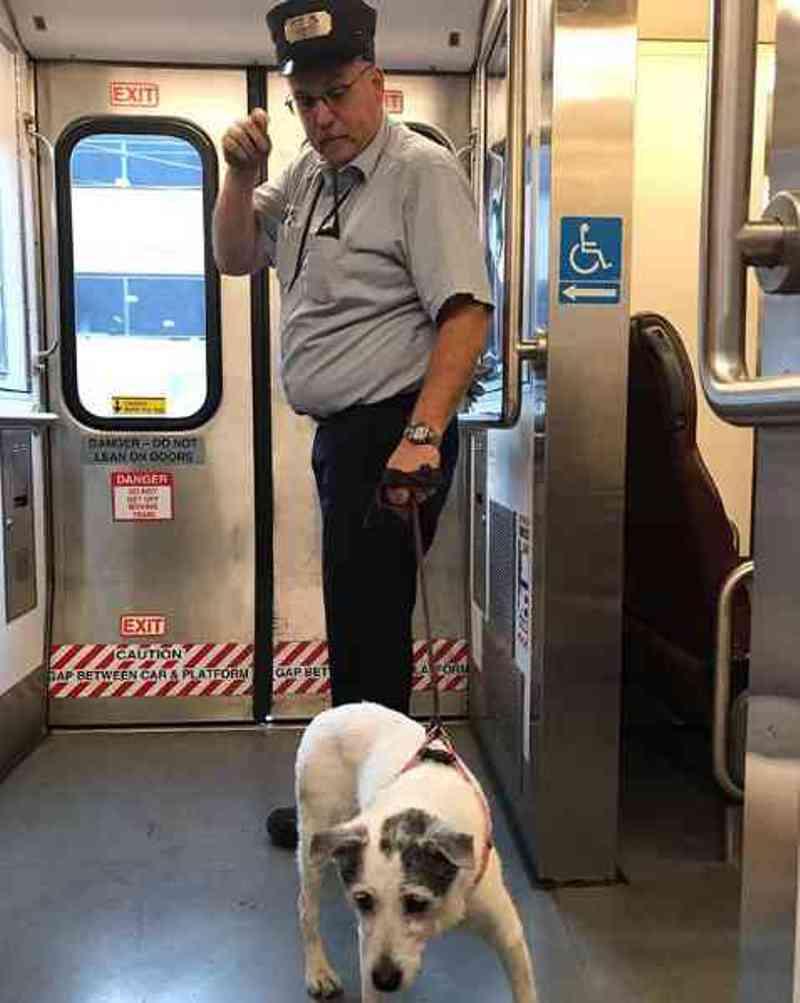Trajeto de trem é interrompido e cão que estava em trilhos é salvo