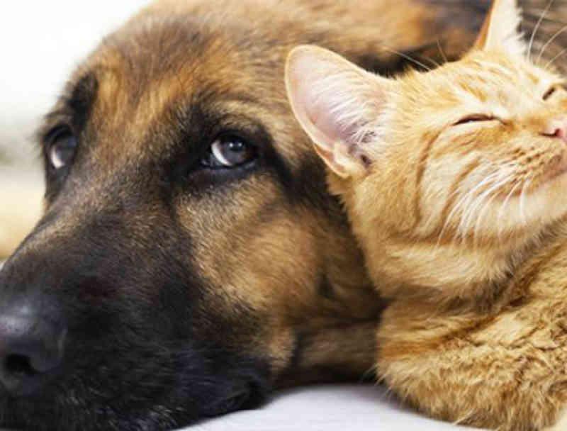 Empresas deduzirão do IR doações a entidades protetoras dos animais