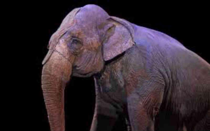 Enquete mostra que mais de 70% das pessoas na Alemanha, Espanha, Itália e Reino Unido querem proibir animais selvagens em circos