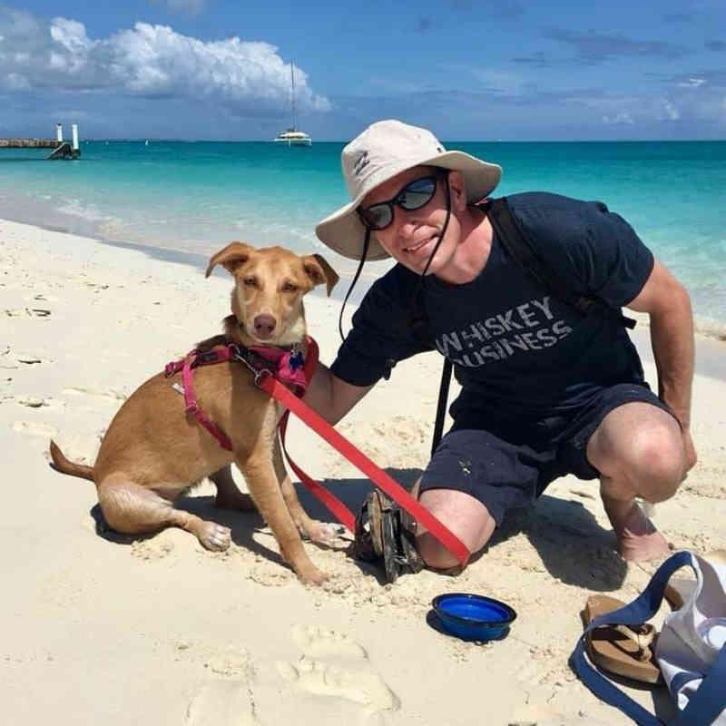 Ilha na França permite passar um dia com filhotinho de cão resgatado