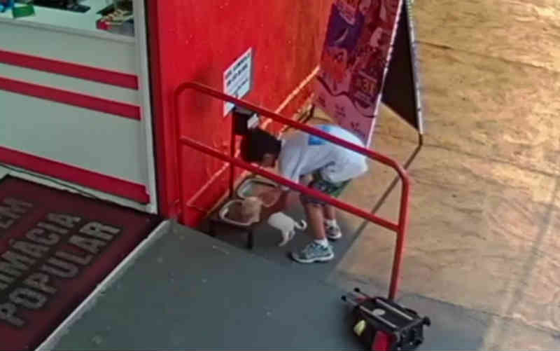 Menino salva filhote de cachorro abandonado, o leva na mochila para comer, e vídeo bomba na web