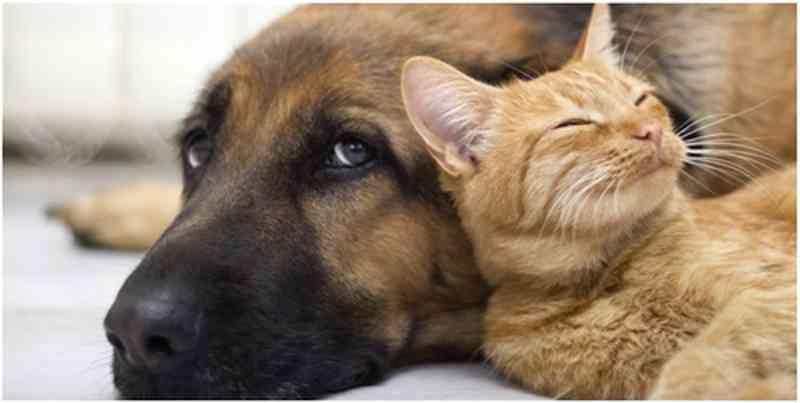 OAB de Goiás faz campanha de proteção a animais domésticos e de rua
