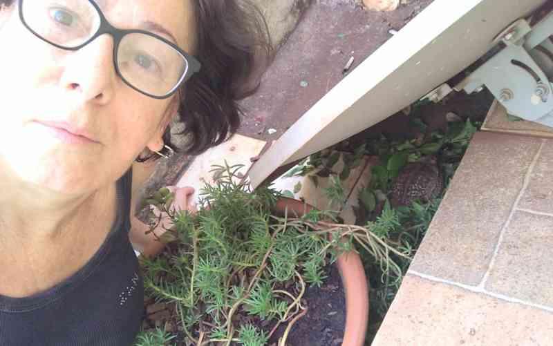 Professora 'adota' sapo que perdeu movimento das patas após ser mordido pelo cão dela, em Itumbiara, GO