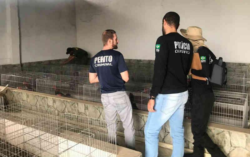 Polícia resgata 160 galos criados em gaiolas para serem usados em rinhas em Alexânia, GO