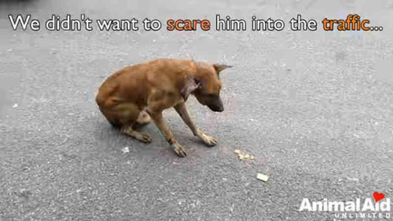 Cão entre a vida e a morte é resgatado na Índia