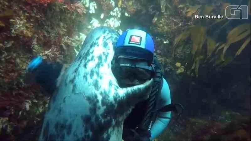 Mergulhador ganha abraço de foca em arquipélago na Inglaterra; veja vídeo