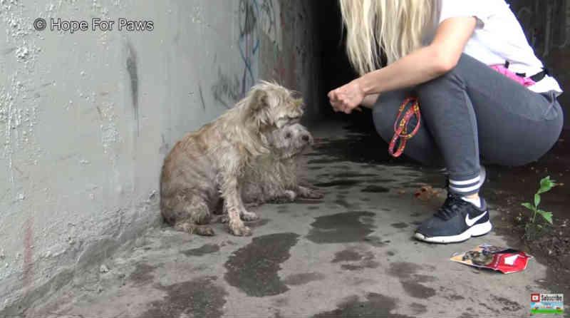 Estes dois cães estavam presos no esgoto de um rio de Los Angeles e cheios de pulgas. Agora eles parecem novos filhotes!