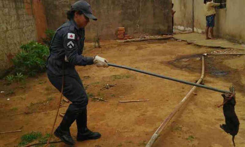 Filhote de cachorro cai em fossa de 3 metros em Araguari, MG