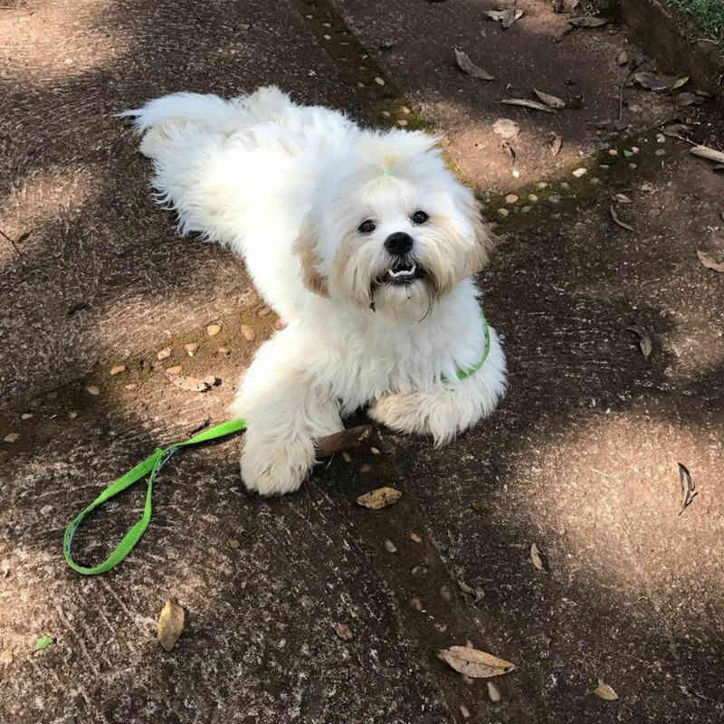 Pet shop é condenado a indenizar tutor de cachorro que morreu enforcado durante banho e tosa em Araxá, MG