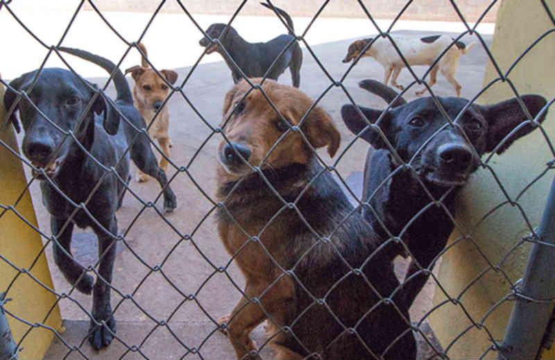 Prefeitura realiza novo processo de castração de cães em gatos em Araxá, MG