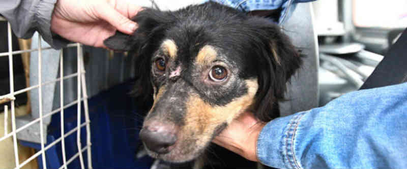Cães em situação de maus-tratos são resgatados de canil em Ituiutaba (MG) e colocados para adoção