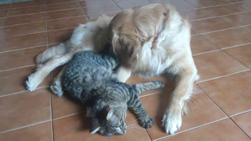 Conflitos entre cães e gatos podem ser provocados pela má sociabilização e falta de estímulos