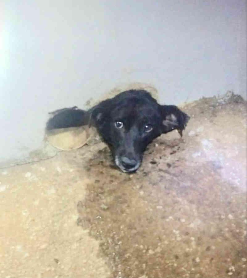 Corpo de Bombeiros de Uberaba (MG) resgata cachorra presa em cano de PVC