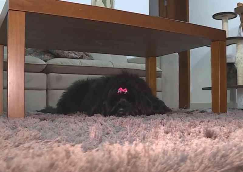Cães e gatos também podem desenvolver Alzheimer; veja quais são os sintomas