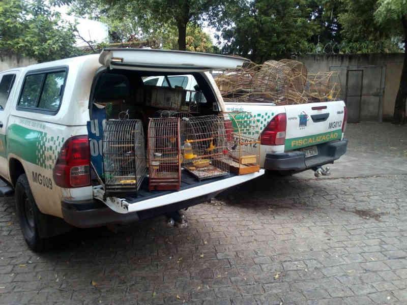 Ibama apreende animais em extinção e suspende 33 criadouros irregulares no Norte de Minas