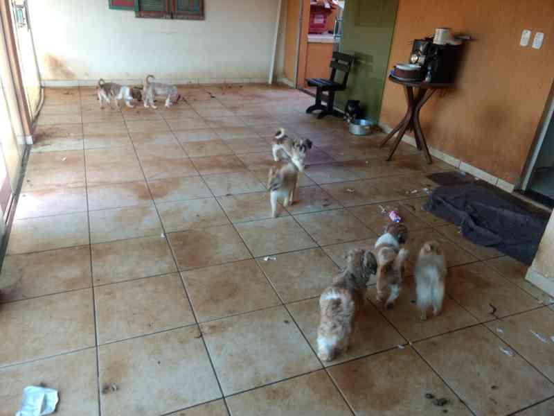 Ministério Público fecha canil clandestino com 51 cachorros em situação de maus-tratos em Ituiutaba, MG