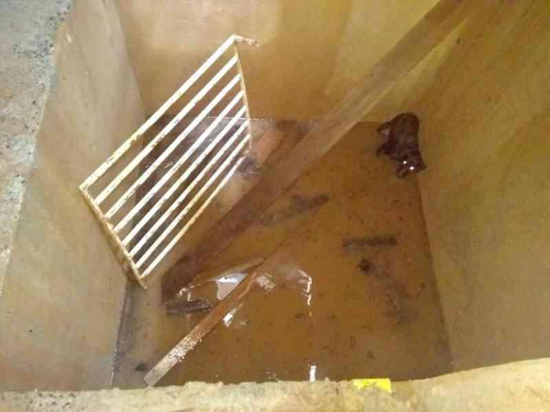 Cachorro é resgatado dentro de fosso de elevador em Uberaba, MG