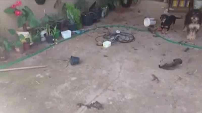 Cães são encontrados em situação de maus-tratos no Bairro Jardim Célia, em Uberlândia, MG
