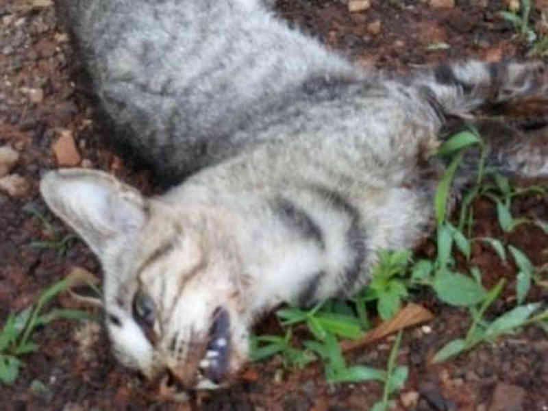 Cuidadora denuncia envenenamento de gatos e quer acionar polícia em Campo Grande, MS