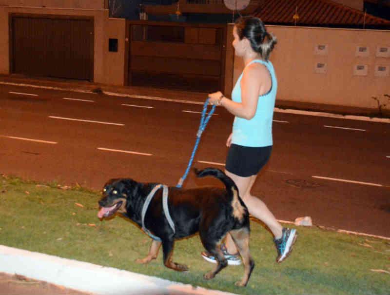Município de Campo Grande (MS) prepara compra  de 20 mil chips para cães e gatos
