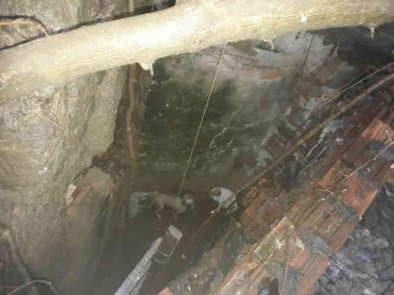 Cães caem em buraco de encosta e são resgatados pelo Corpo de Bombeiros em Corumbá, MS