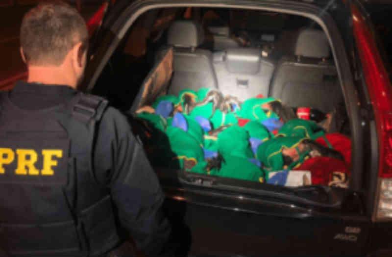 PRF prende três homens por maus-tratos a 13 galos de rinha em MS