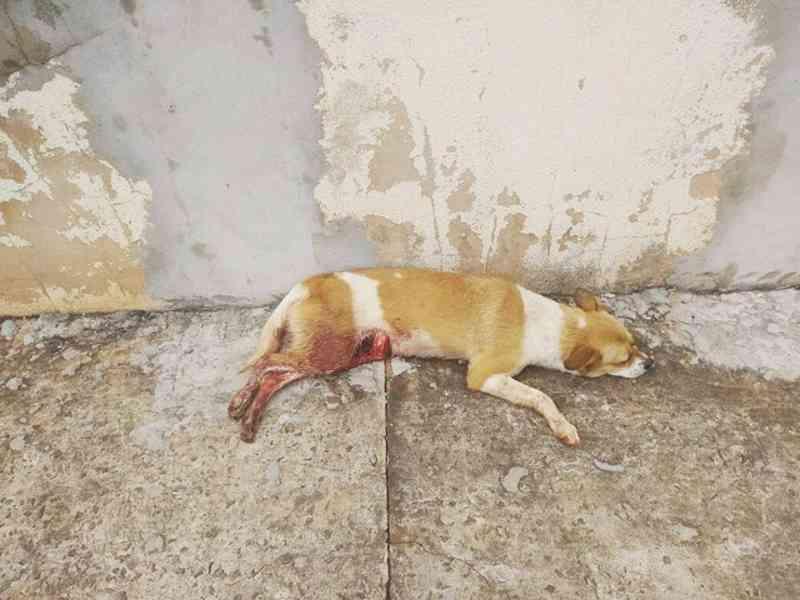 Cães são queimados e esfaqueados pelo tutor em Campo Grande, MS; após denúncia, animais são resgatados