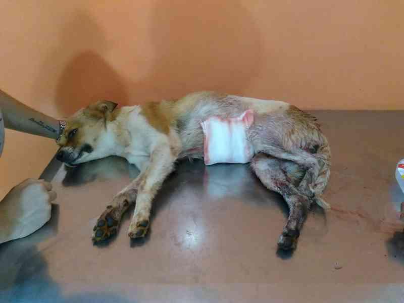 PMA busca suspeito de maltratar cachorros no Coronel Antonino, em Campo Grande, MS