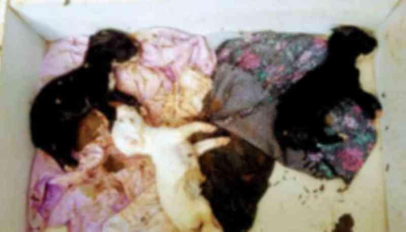 Filhotes morrem após serem abandonados por tutora que 'fugiu' para não pagar aluguel