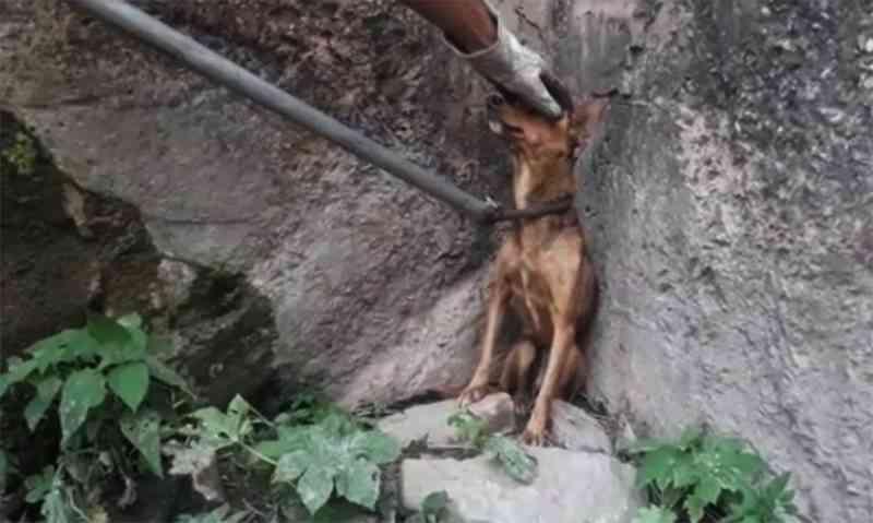 Bombeiros resgatam cadela que estava em galeria há mais de três dias em Corumbá, MS