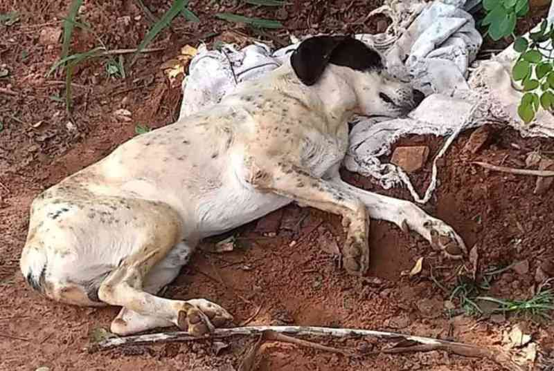 Cachorro é abandonado agonizando em via pública de Nova Andradina, MS