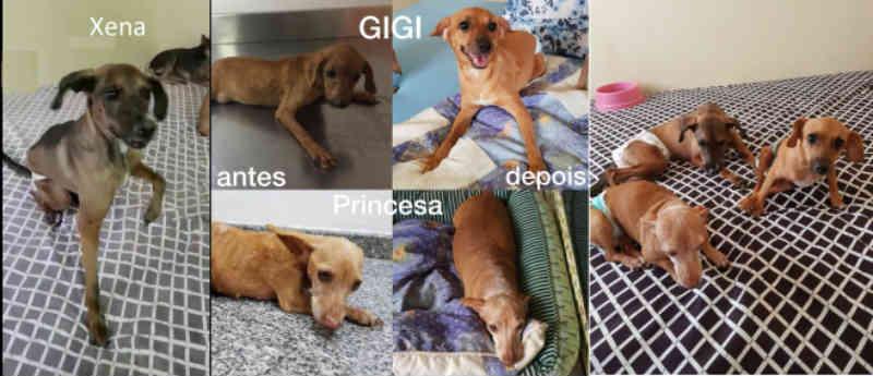 ONG em Mato Grosso recupera movimento de cães com tratamento, mas precisa de ajuda
