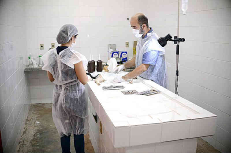 Cães e gatos: Meta do município de Rondonópolis (MT) é castrar cerca de 200 animais por mês