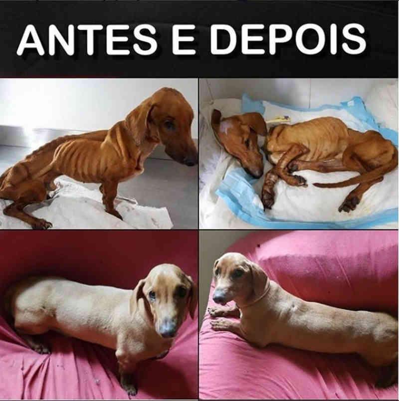 Cão abandonado com doença grave em MT se recupera e ONG mostra antes e depois
