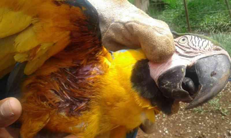 Homem ataca arara com estilingue em praça de Lucas do Rio Verde, MT